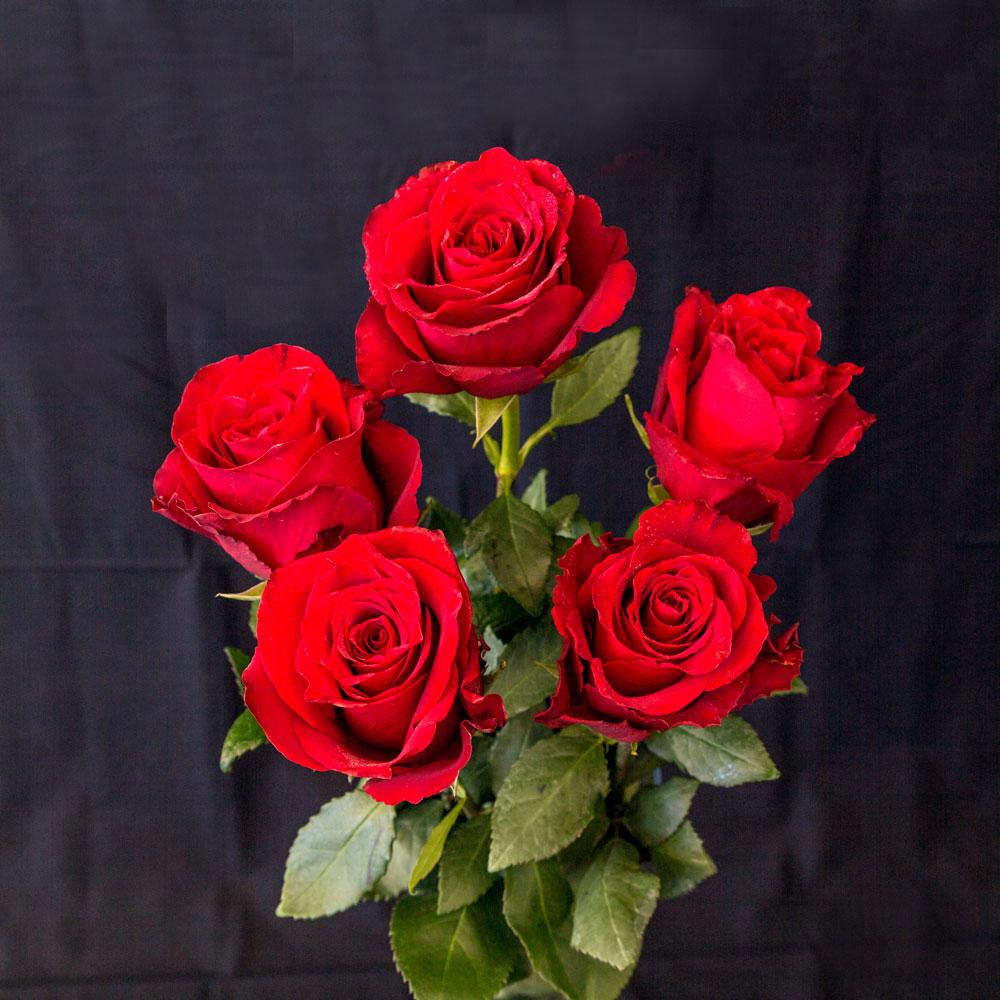 red rose 5 pieces shop fior da lisa
