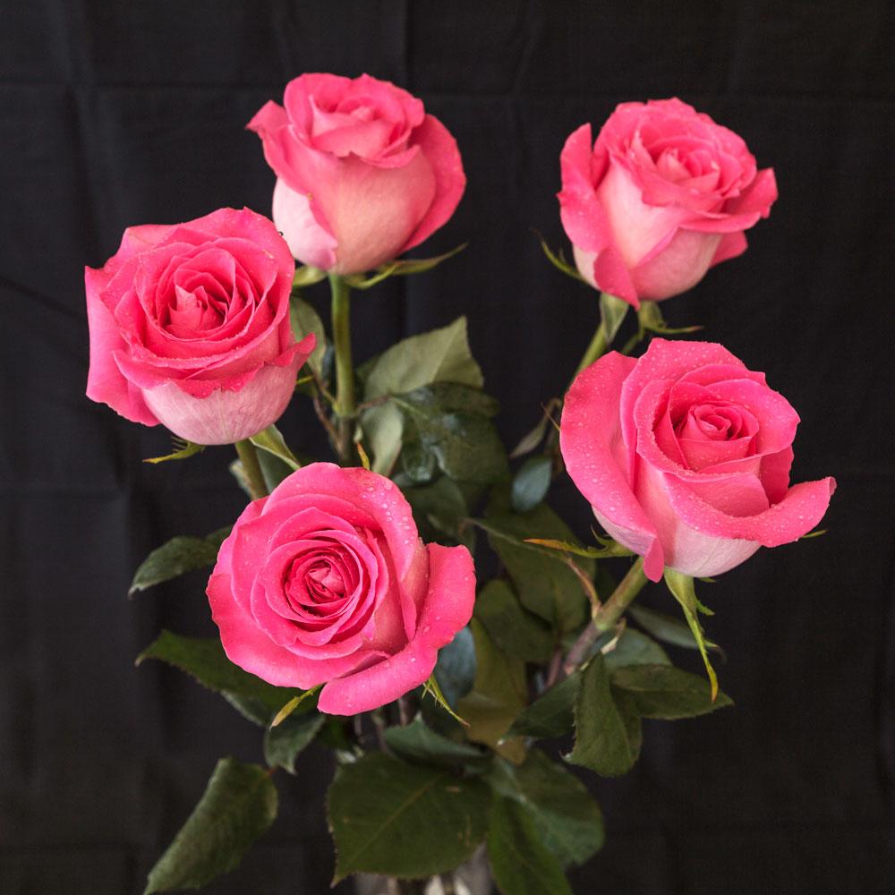 Pink Roses 5 pieces | Shop Fior da Lisa